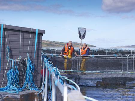 omnivore: Workers standing in fish farm
