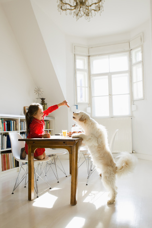 requiring: Girl feeding dog at table