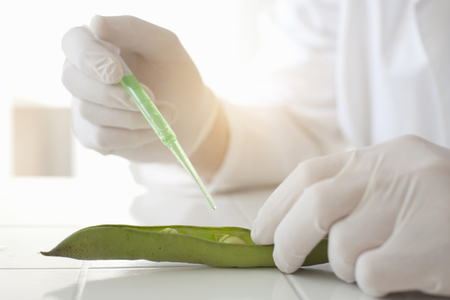 Scientist dropping liquid on peas in pod