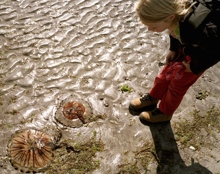 Girl examining beached jellyfish in sand LANG_EVOIMAGES