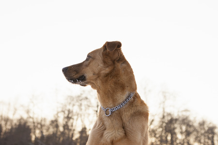 Close up of dog standing outdoors