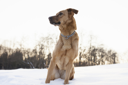snows: Dog sitting in snowy field LANG_EVOIMAGES
