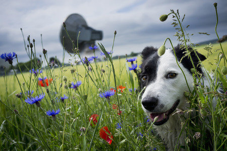 hearted: Dog walking in tall grass