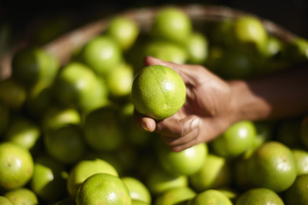 Close up of hand holding lime