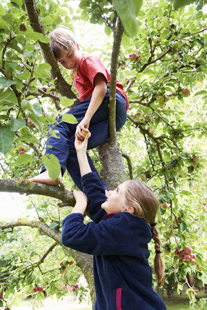 provide: Children picking fruit in tree LANG_EVOIMAGES