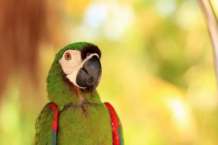 egglayer: Close up of tropical parrots face LANG_EVOIMAGES