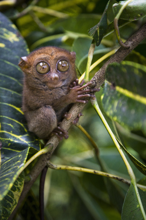 climbed: Small monkey perched in tree