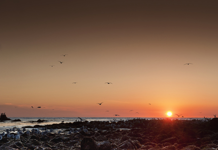 Seagulls flying over Malibu beach at sunset, California, USA