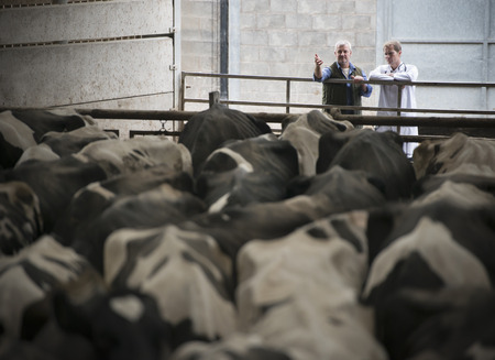 motioning: Farmer and veterinarian talking in barn LANG_EVOIMAGES