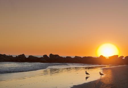 egglayer: Sunset at Venice beach, Los Angeles, USA