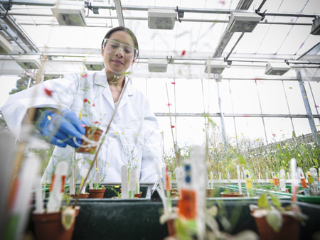 conservatories: Scientist working with potted plants LANG_EVOIMAGES