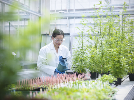 conservatories: Scientist watering potted plants