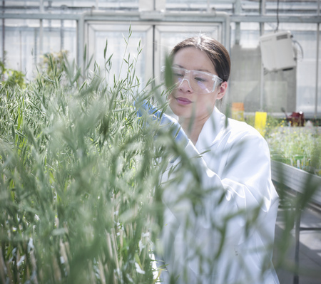 conservatories: Scientist examining plants in greenhouse