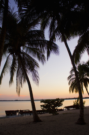 suns: Silhouette of palm trees at sunset LANG_EVOIMAGES