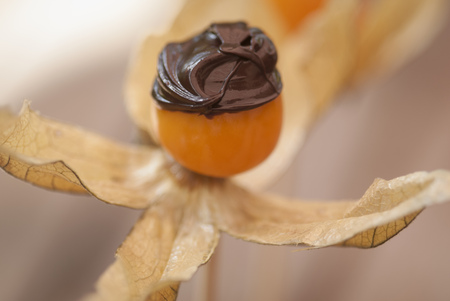 tempted: Chocolate on flower fruit