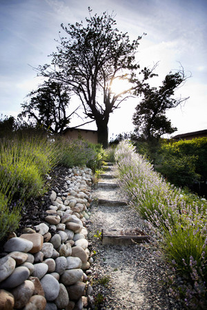 lodgings: Stone path leading to tree