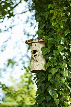 Birdhouse on ivy tree in backyard LANG_EVOIMAGES