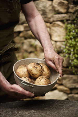 dirtied: Man with bowl of fresh picked potatoes LANG_EVOIMAGES