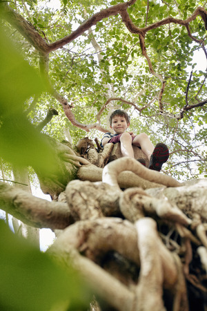 scaling: Boy sitting in tree top