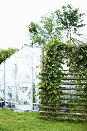 conservatories: Greenhouse with plants in backyard