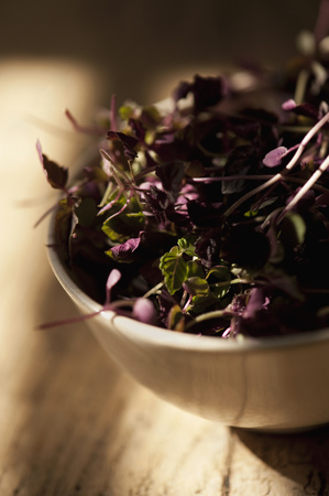 purples: Close up of bowl of purple basil leaves