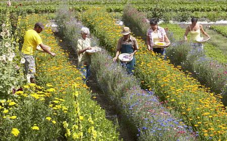 Older people picking flowers in field