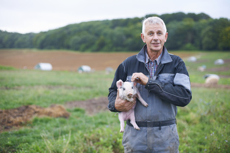 focus on foreground: Farmer holding piglet in field LANG_EVOIMAGES