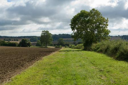 tetbury: Grass growing in tilled crop field