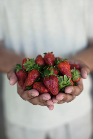 close up food: Close up of hands holding strawberries
