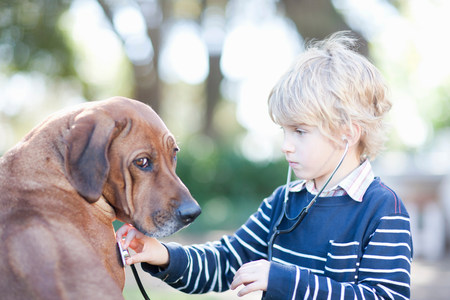 Boy using stethoscope on pet dog LANG_EVOIMAGES