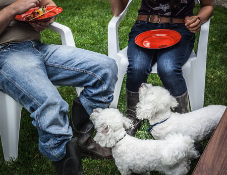 pleaded: Dogs begging for owners food LANG_EVOIMAGES