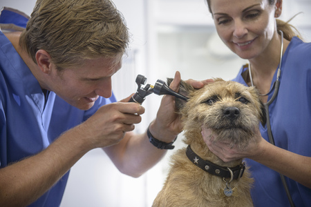 Veterinarians examining dog in office LANG_EVOIMAGES