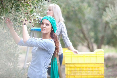 looking at viewer: Two women picking olives in olive grove