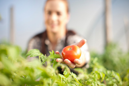 proudly: Young woman showing tomato grown at vegetable farm