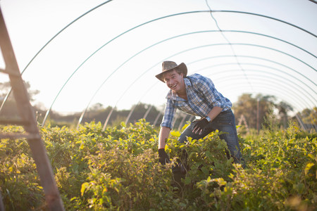 looking at viewer: Young man working in vegetable greenhouse LANG_EVOIMAGES