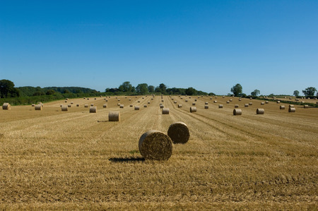 tetbury: Hay bales in crop field