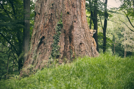 bashfulness: Boy wearing tiger costume outdoors