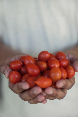 appendage: Close up of hands holding tomatoes LANG_EVOIMAGES