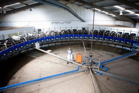 farmyards: Milking machine in dairy farm
