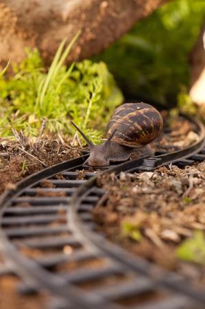 vintage: Snail moving along train tracks