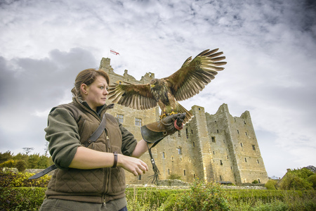 handlers: Woman with hawk and gauntlet outdoors