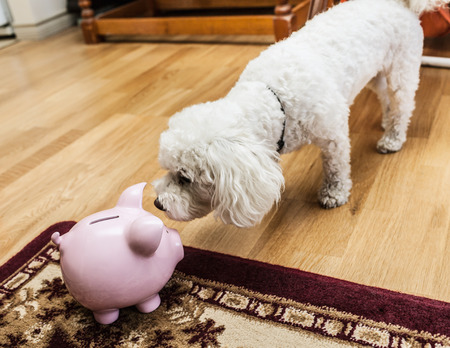 arrears: Dog examining piggy bank in living room