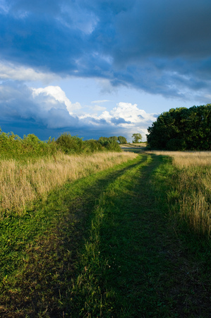 journeying: Dirt path in field of tall grass LANG_EVOIMAGES