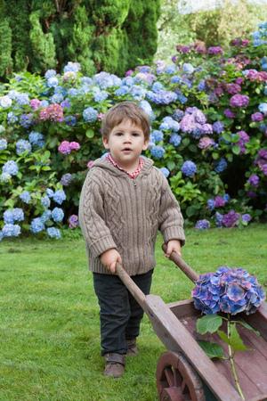 purples: Toddler boy with wheelbarrow of flowers