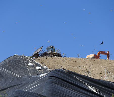 egglayer: Birds flying over machinery in landfill