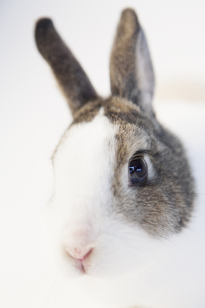 Close up of rabbits face LANG_EVOIMAGES