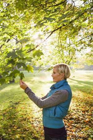 Woman admiring leaves in park LANG_EVOIMAGES