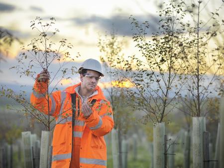 Ecólogo examinando los árboles jóvenes LANG_EVOIMAGES