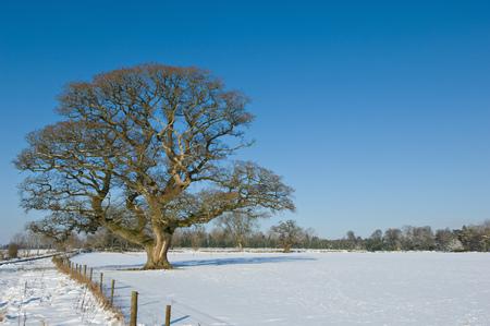 tetbury: Tree growing in snowy rural field