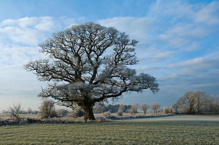 tetbury: Tree growing in rural field